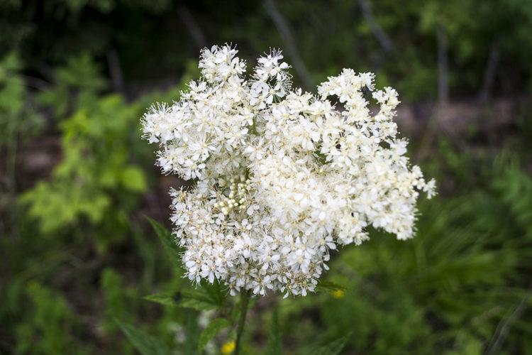 Koliko poznajete lijepu biljku passiflora incarnata - RTL ŽIVOT I STIL
