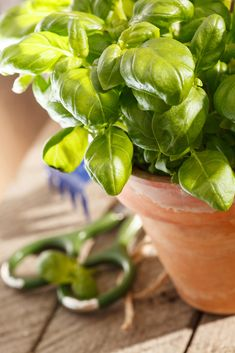 ALOE VERA: Uzgoj, primjena i recepti za eliksire i kozmetiku